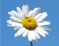 Месячник «Белая ромашка», приуроченный к Всемирному дню борьбы с туберкулезом
